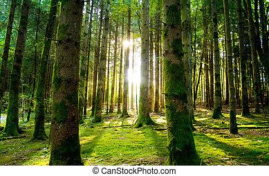 překrásný, scenérie, s, sluneční paprsci, do, ta, les