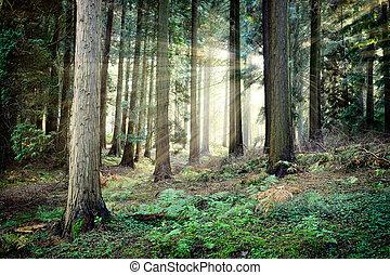 překrásný, tajemný, západ slunce, les