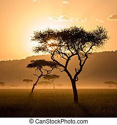 překrásný, západ slunce, do, massai, mara