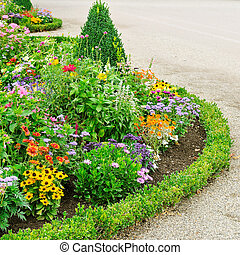 přenosová cesta, květovat loisko, park., město, chůze