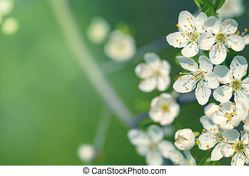 původ přivést do květu