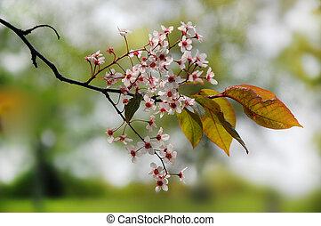 původ přivést do květu, oproti větvit