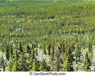 país, bosque boreal, vida