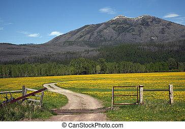 país, caminos, montana, campo, flor amarilla, granja,...