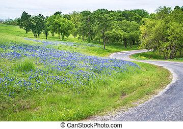país, campo, tejas, bluebonnet, por, camino