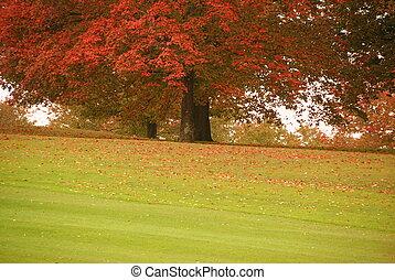 país, otoño