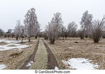 país, paisagem, gelado, estrada
