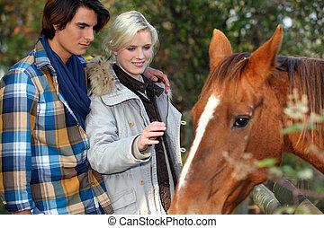 paar, het petting, paarde, jonge