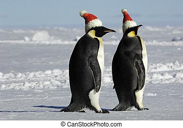 paar, kerstmis, penguin