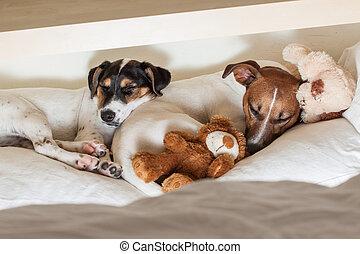 paar, liefde, twee, honden