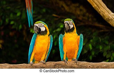 paar, macaw
