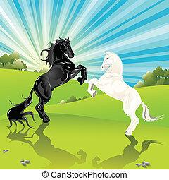 paar, pferden