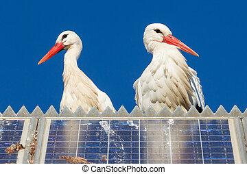 paar, von, störche, stehende , auf, a, solarmodul