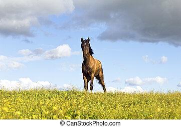 paard chestnut
