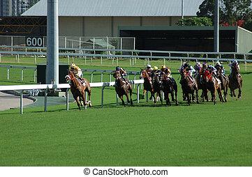 paard te rennen