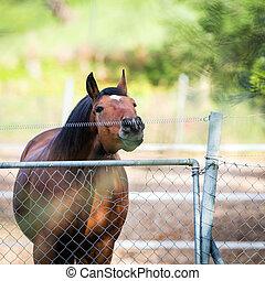 paarde, aandoenlijk, een, elektrisch, onheiningen