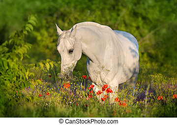 paarde, arabisch, bloemen