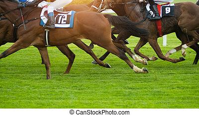 paarde, buiten, het snelen, derby