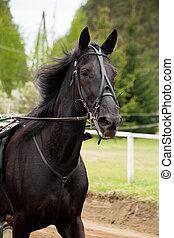 paarde, competitie, trotter, verticaal