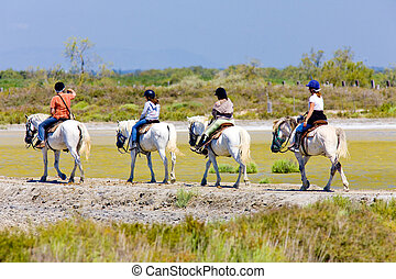paarde, de, parc, regionaal, frankrijk, camargue, ...
