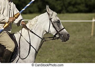paarde, gedurende, het historische weer invoeren