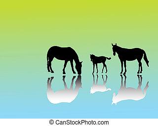 paarde, groep