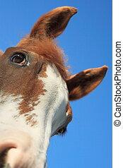 paarde, hemel, &