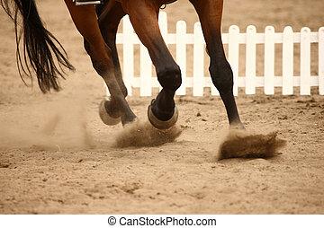 paarde, het galopperen