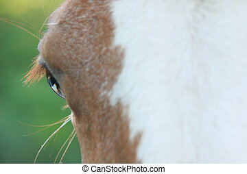 paarde, het turen