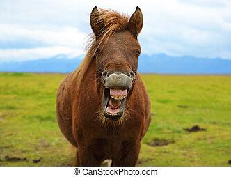 paarde, humor, zin