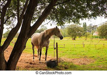 paarde, in, de, boerderijdieren