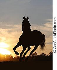 paarde, in, ondergaande zon