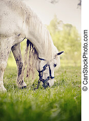paarde, lang, manen, verticaal, witte , grazen
