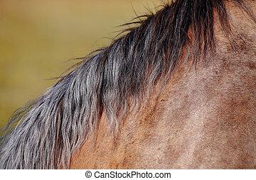 paarde, manen