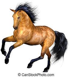 paarde, mooi
