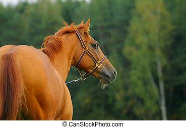 paarde, natuur