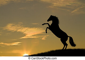 paarde, ondergaande zon