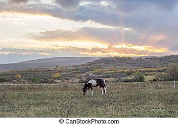 paarde, ondergaande zon , weide