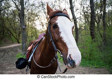 paarde, op, nature., verticaal, van, een, paarde