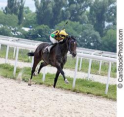 paarde, racing.