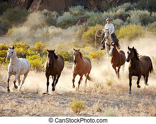 paarde, ronde, op