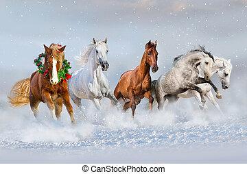 paarde, sneeuw