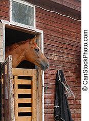 paarde, stal