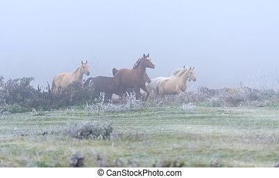 paarde