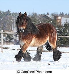 paarde, teug, sneeuw, lang, rennende , manen, hollandse,...