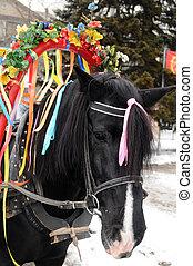 paarde, trots, black , jonge