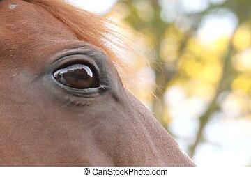 paarde, trots