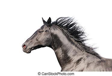 paarde, vrijstaand, black , actie, verticaal, witte