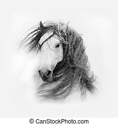 paarde, vrijstaand, lang, andalusian, manen, witte