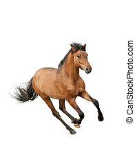 paarde, vrijstaand